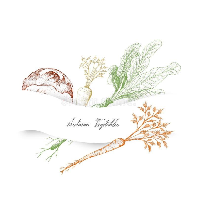 Autumn Vegetables disegnato a mano di Radicchio, del prezzemolo di Amburgo e del rafano royalty illustrazione gratis