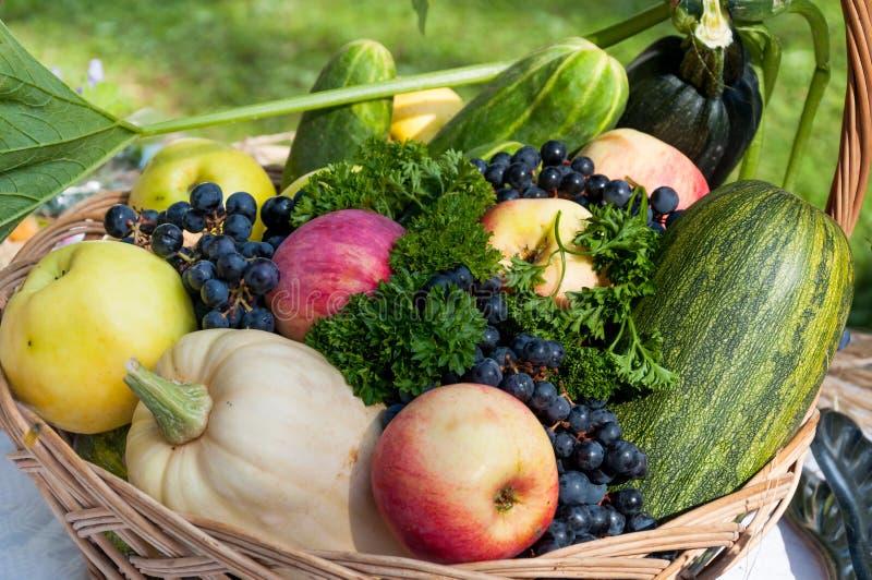 Autumn vegetables. Organic vegetables still life - autumn harvest stock images