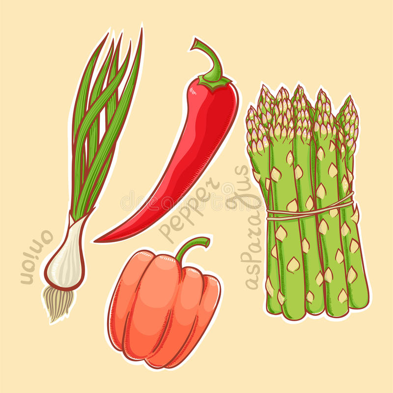 Autumn vegetables - 2 stock illustration