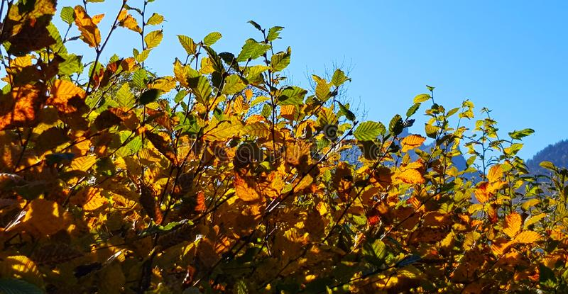 Autumn vegetation under the blue sky. royalty free stock photography