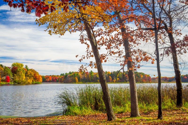 Autumn Vibrant Colors del roble Tress Along el río de Apple foto de archivo libre de regalías
