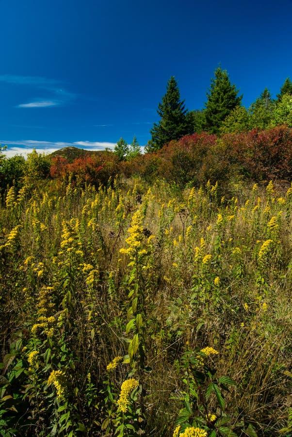 Autumn vid Black Balsam, Pisgah National Forest arkivbild