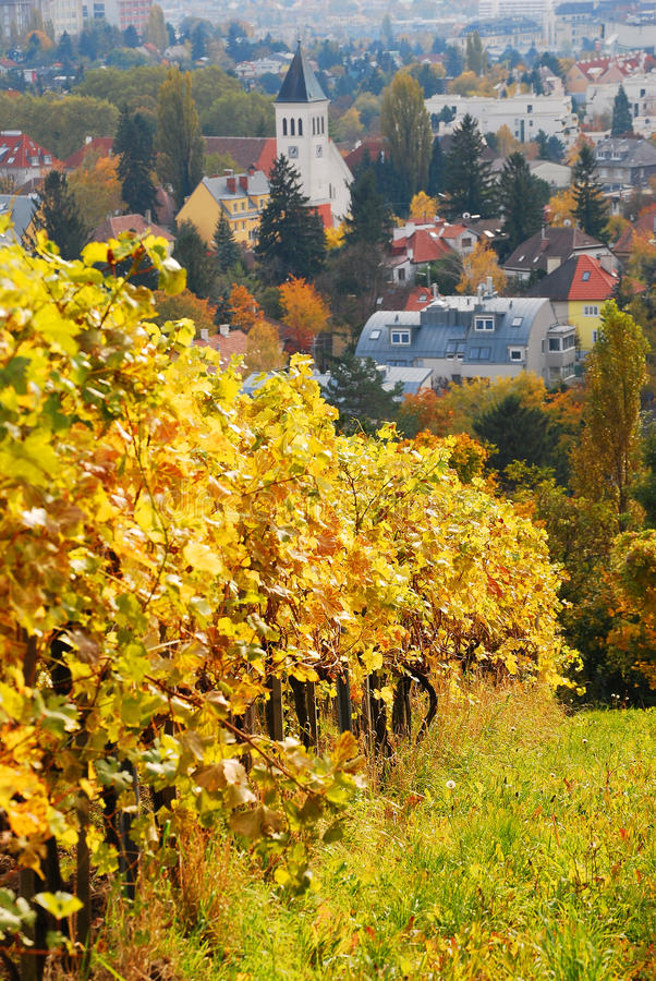 Download Autumn in Vienna stock image. Image of sunny, steeple - 26551913