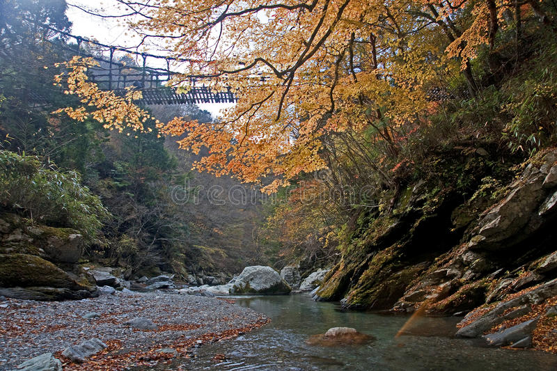 Autumn view of the bridge of lianas royalty free stock images