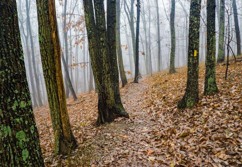Autumn View d'un sentier de randonnée brumeux - 2 photos stock