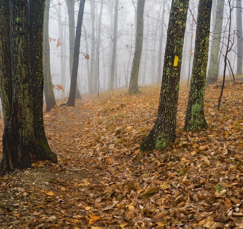 Autumn View of a Foggy Hiking Trail. An autumn view of a foggy mountain hiking trail located in the Blue Ridge Mountains of Virginia, USA stock photo