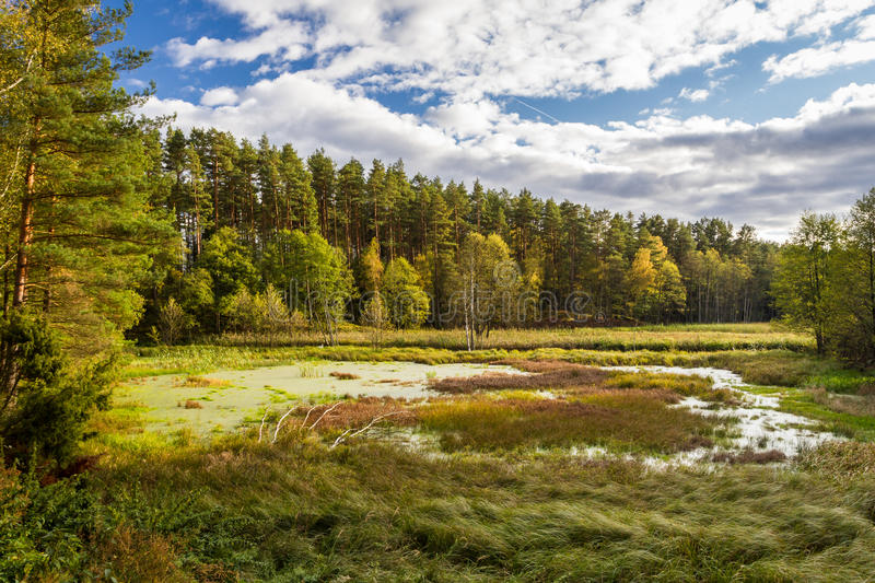 Autumn view over the backwaters royalty free stock photography