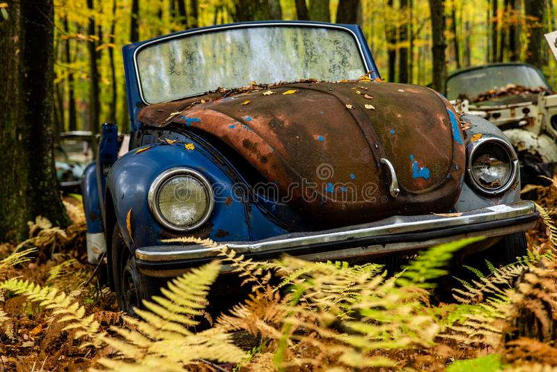 Vintage VW Beetle - Volkswagen Type I - Pennsylvania Junkyard. An autumn view of a vintage VW Beetle / Volkswagen Type 1 in a junkyard in the woods of stock photo