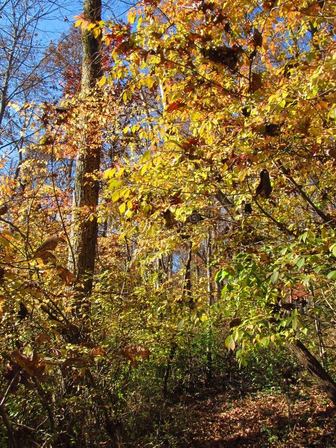 Autumn Views along a Trail royalty free stock photo