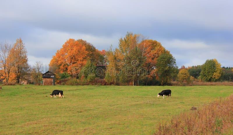 Autumn in the Village stock photo