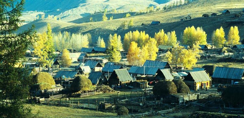Autumn village Baihaba, xinjiang,china royalty free stock photo