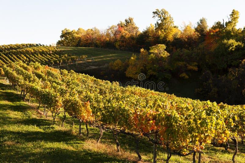 Autumn vineyard in Virginia royalty free stock photo