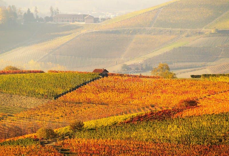 Autumn vineyards stock image