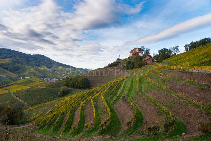 Landscape above Durbach in the black forest. Autumn in the vineyards of Durbach in the black forest in germany royalty free stock image