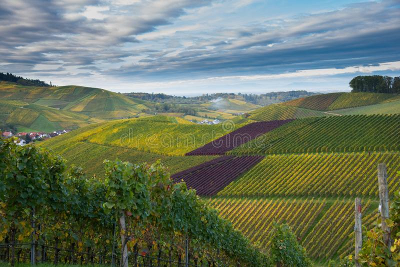 Landscape above Durbach in the black forest. Autumn in the vineyards of Durbach in the black forest in germany stock photos