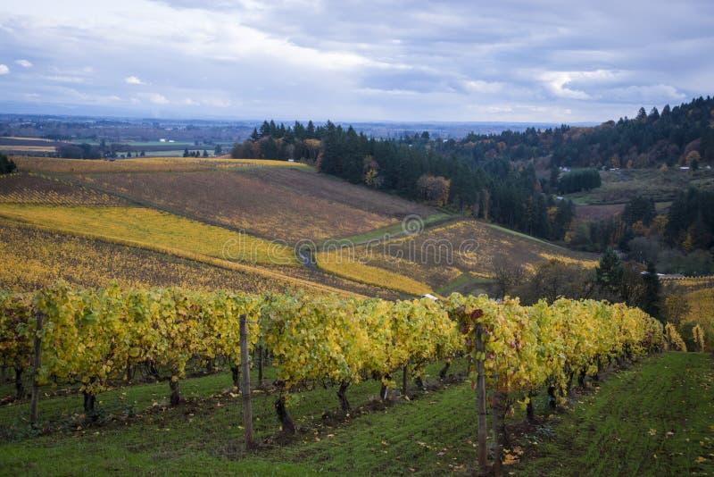 Autumn vineyards, Willamette Valley, Oregon royalty free stock photo