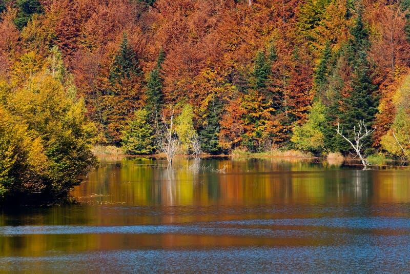 Download Autumn Vivid Colors On Lake Stock Image - Image: 6947753