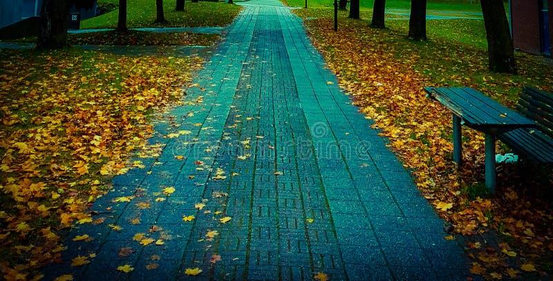 Autumn Walk fotografia stock libera da diritti
