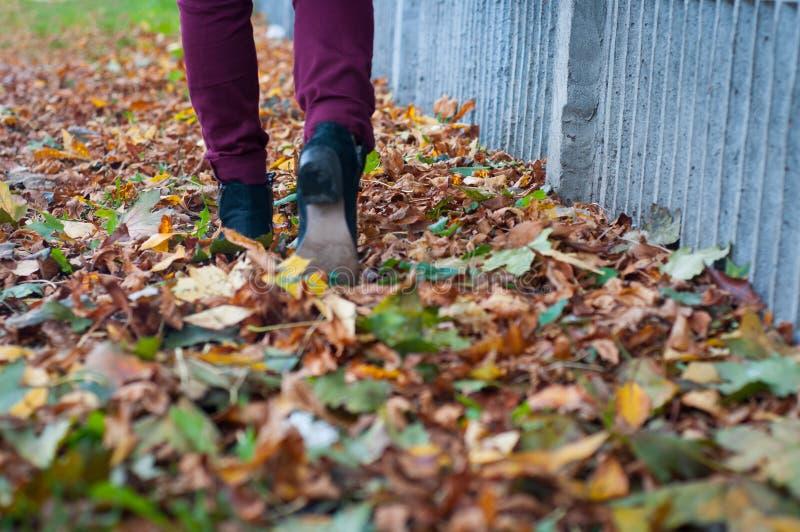 Download Autumn Walk imagen de archivo. Imagen de negro, arce - 64209885