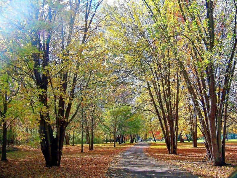 Autumn Walk stockbild