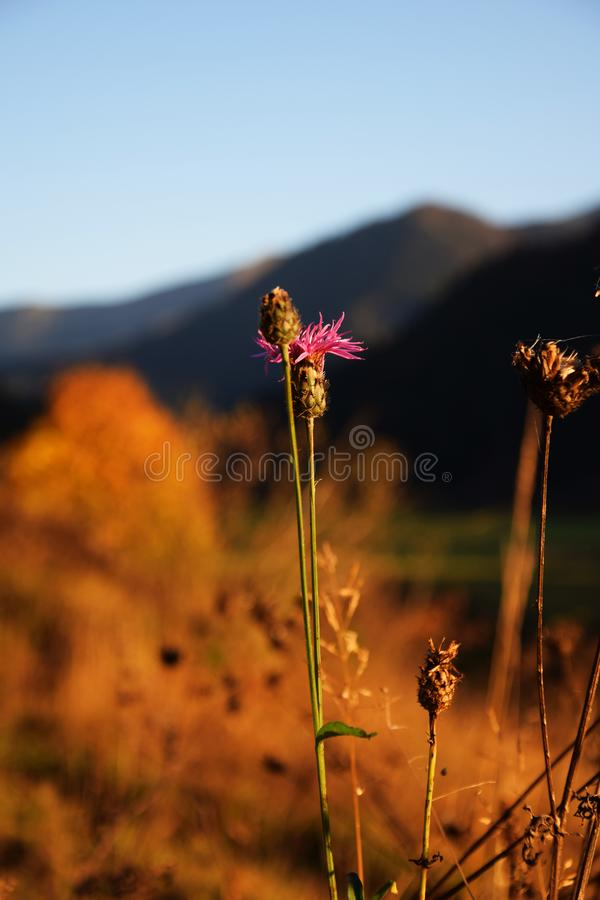 Dry grass in beautiful countryside. Autumn walk that did not leave without documentation. Slovakia is beautiful country royalty free stock image