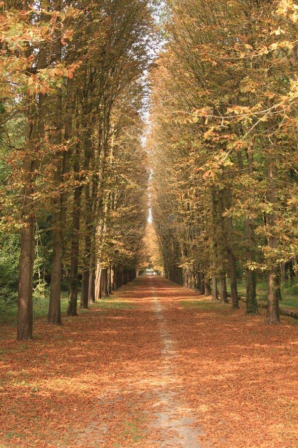 Autumn walk through a forest