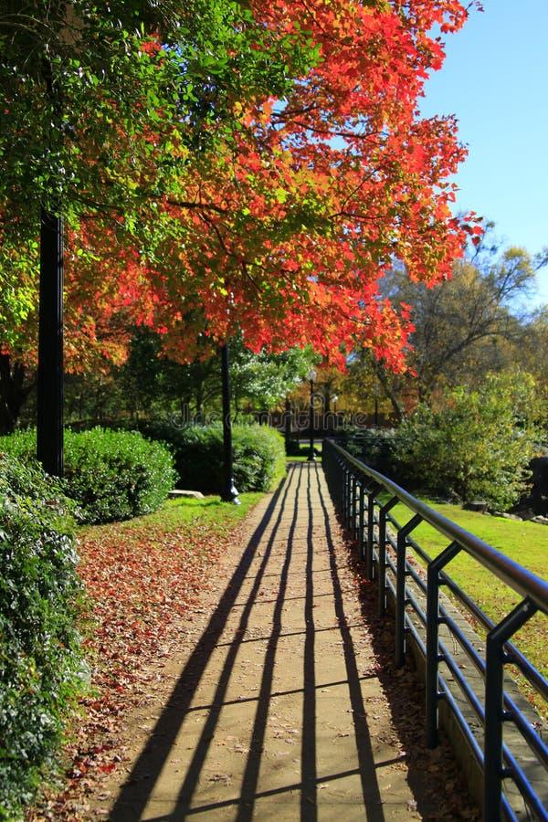 Autumn Walk med distinkta skuggor och briljant nedg?ngl?vverk royaltyfri fotografi