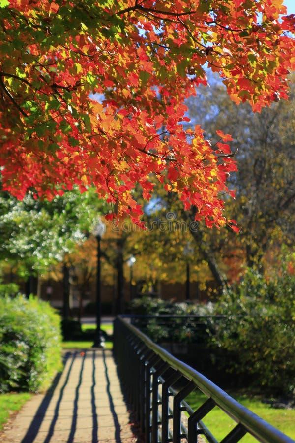 Autumn Walk med r?d l?vverk och distinkta skuggor arkivfoto