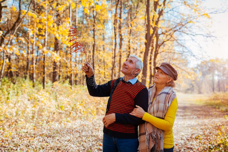 Autumn walk. Senior couple walking in fall park. Happy man and woman talking and relaxing outdoors stock image
