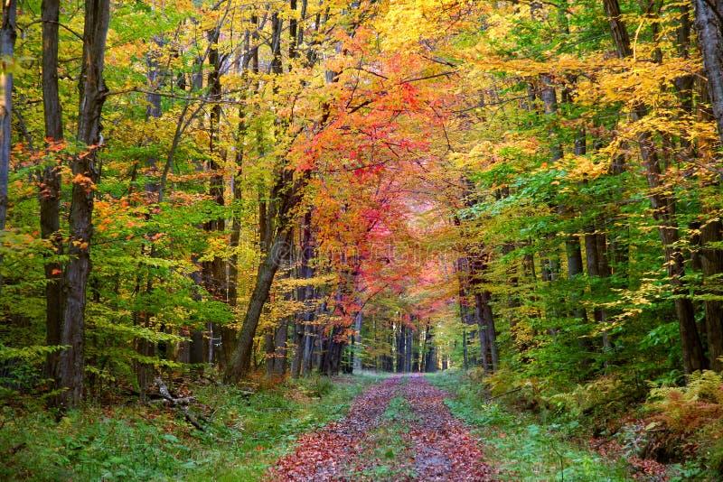 Download Autumn walk way stock image. Image of orange, alley, leafs - 12876041