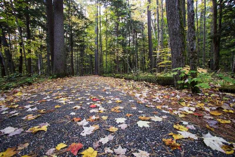 Autumn Walk In The Woods de Michigan imagen de archivo libre de regalías