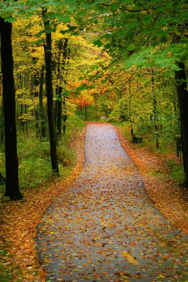 Autumn Walkway stock photos
