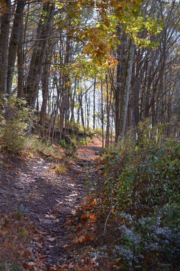 Autumn Walkway Through paisible les bois photos stock