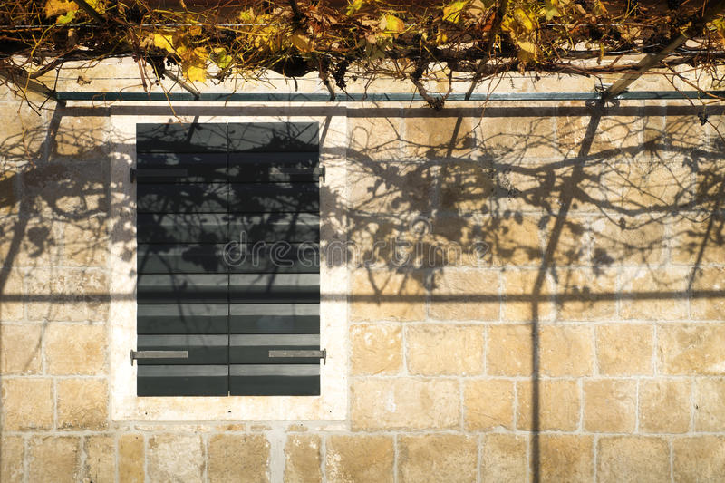 Autumn at the wall. Shadows of autumn leaves at a brick wall in Dubrovnik, Croatia royalty free stock photos