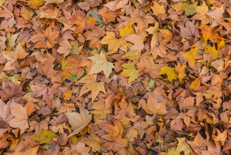 Autumn wallpaper. Fallen leaves in the ground. Autumn wallpaper royalty free stock images