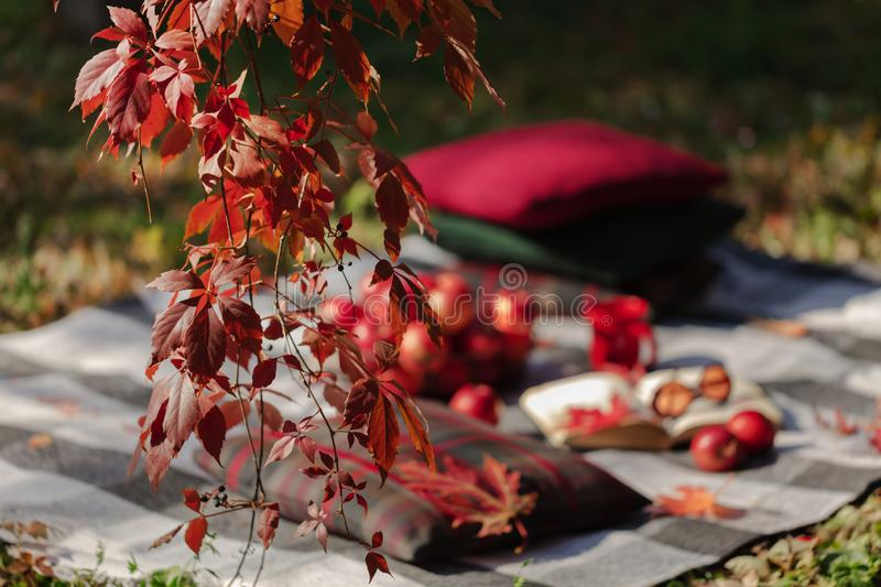 Autumn warm days. Indian summer. Picnic in the garden - blanket and pillows of gray, burgundy and green color on the background of. Autumn leaves. Selective royalty free stock photo
