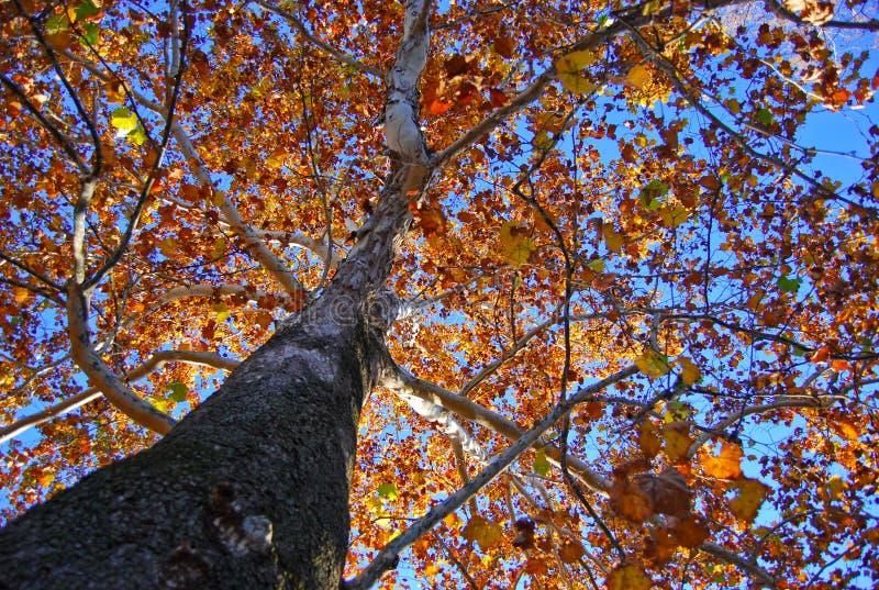 Autumn. Was taken at Vanderbilt University, Nashville, TN royalty free stock photo