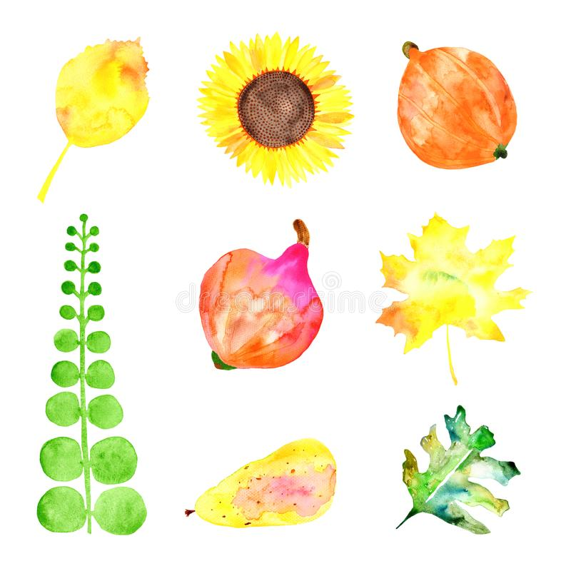 Water colored pear, sunflower, leaves, pumpkins on the white background. vector illustration