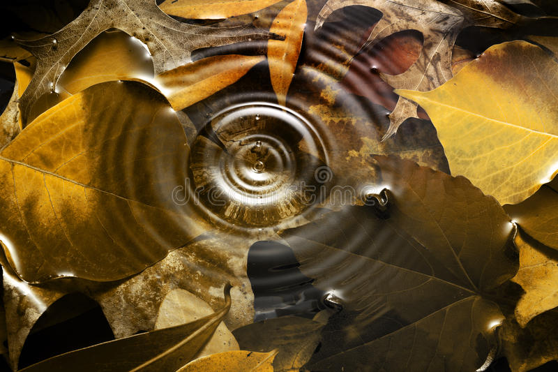 Autumn Water Drop Background royalty-vrije stock foto's