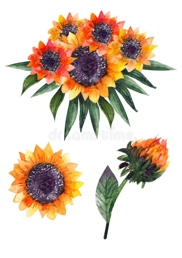 Autumn watercolor compositions or bouquets of sunflowers. Will give a good boost and a positive energy boost. Perfect for designing cards, invitations, party royalty free illustration