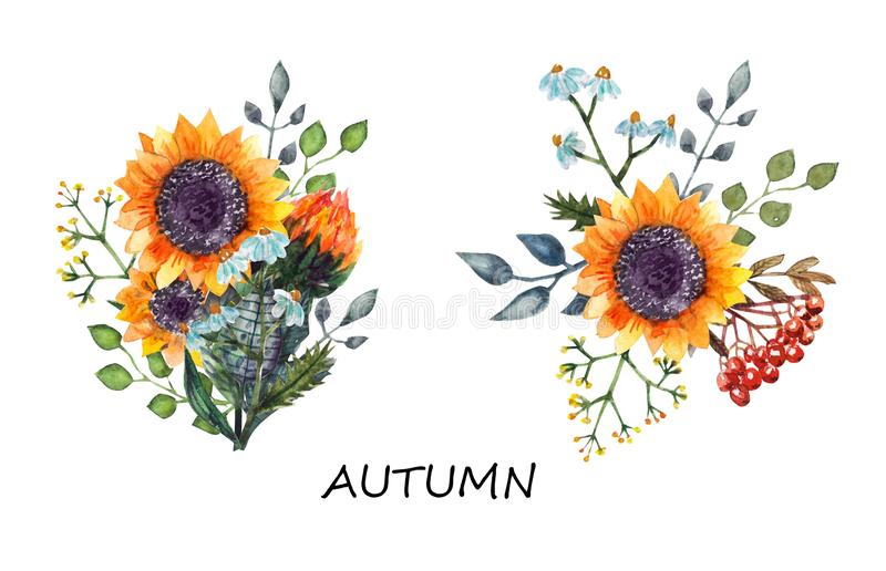 Sunflowers bouquet watercolor vector illustration