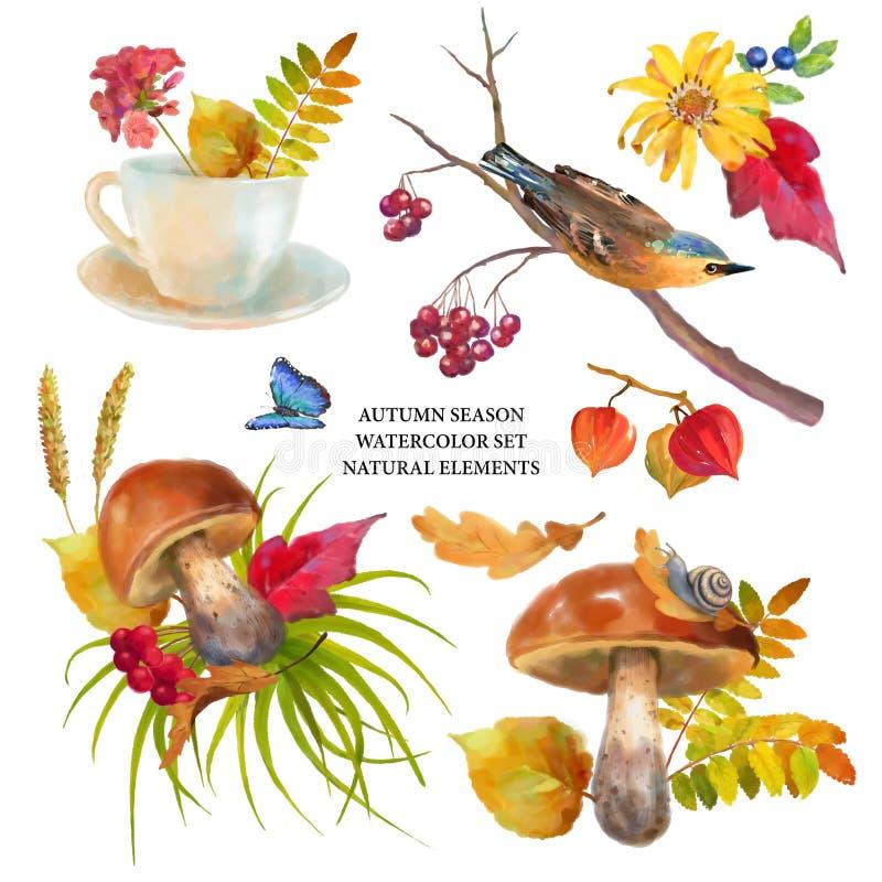 Autumn Watercolor Natural Collection stock de ilustración