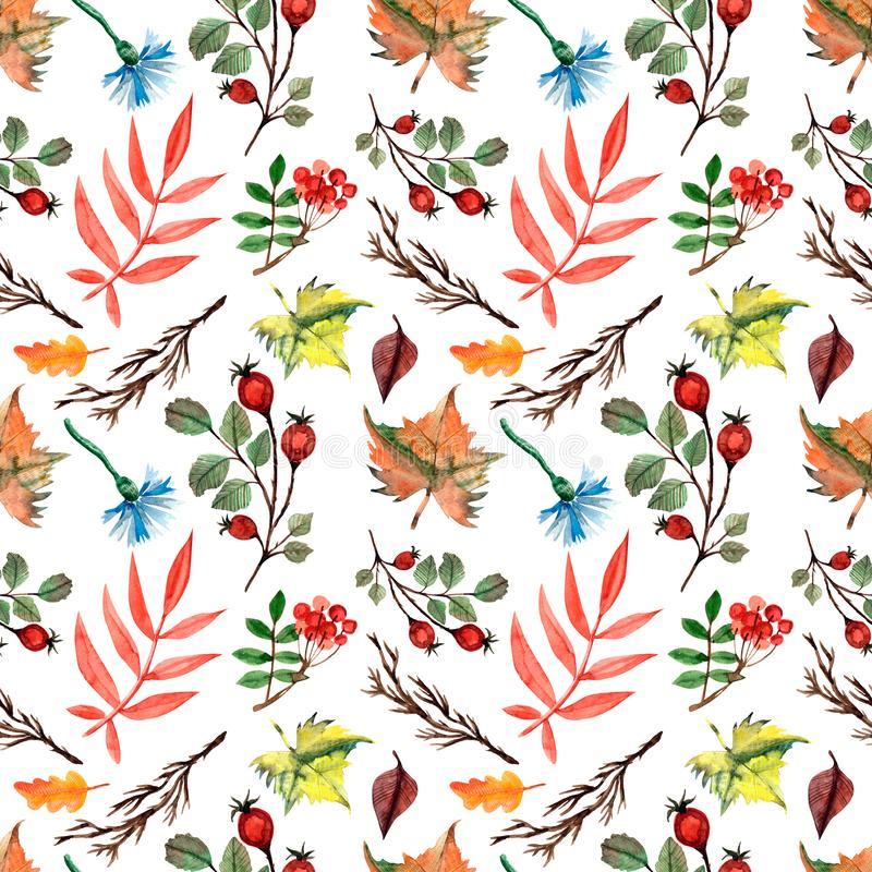 Autumn watercolor seamless pattern with leaves, branches, berries, knapweed, maple leaves,rowan, rose hip, twigs, cornflowers. Autumn background. Hand drawn stock illustration