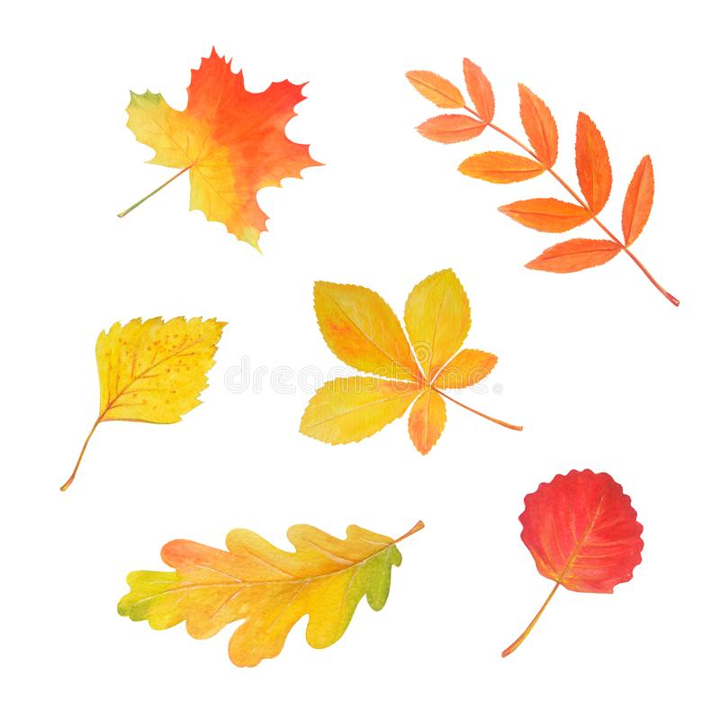 Autumn watercolor set. Bright leaves isolated on white. stock illustration