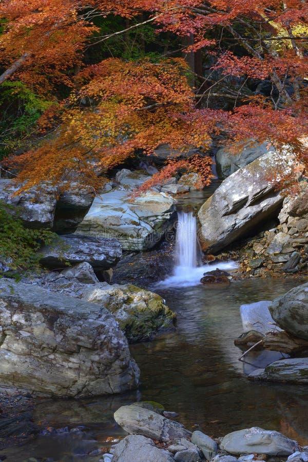 Autumn Waterfall imagen de archivo libre de regalías