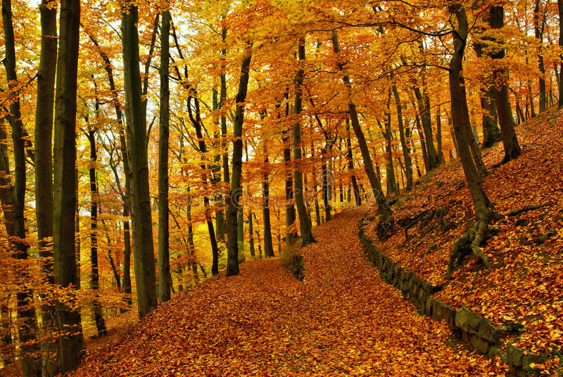 Autumn way. View of forest way in autumn period in month November royalty free stock photo