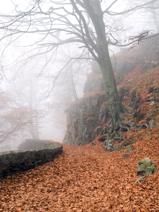 Autumn Way Stock Photography