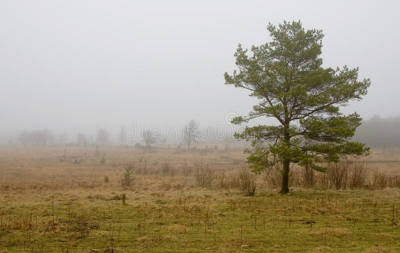 Autumn weather stock photos