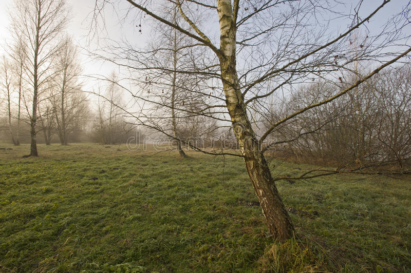 Download Autumn In The Weilheimer Moss Stock Image - Image of weilheimer, sunny: 12024559