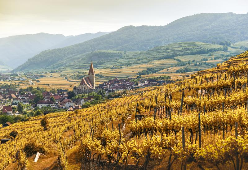 Autumn in Weissenkirchen and vineyards on a sunny day. Wachau. Austria royalty free stock photography